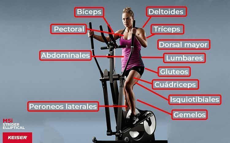 infografia musculos trabajados con Eliptica keiser M5i